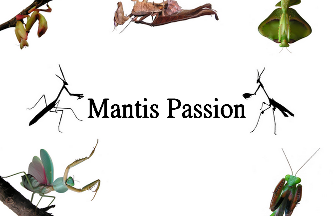 Mantis Passion